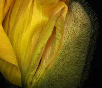 女人花瓣 女性阴部美图