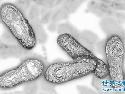 肉毒杆菌的危害 最毒的毒药肉毒杆菌毒素毒性极大