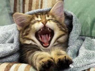 什么猫最粘人 《猫咪为什么那么粘人